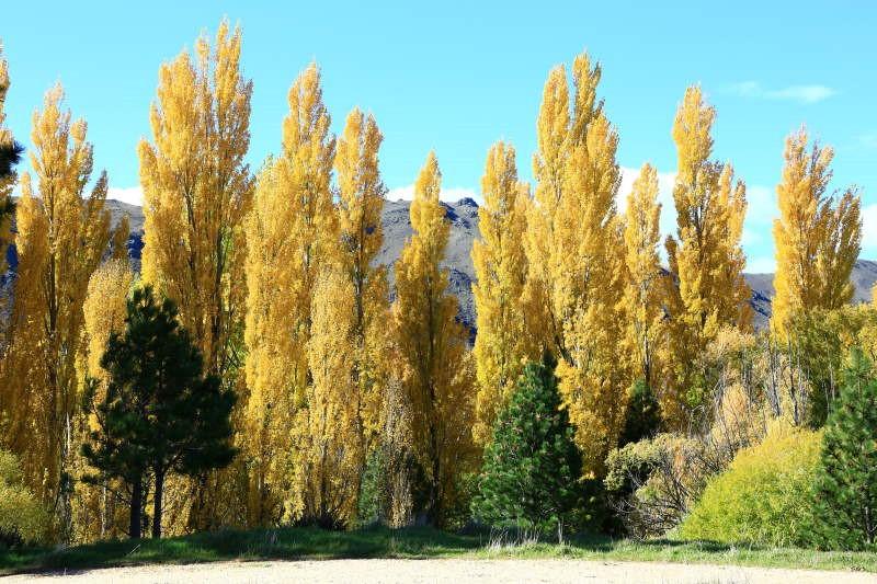 Κοπή δέντρων: Πότε ΔΕΝ μπορείτε να την κάνετε μόνοι σας γιατί είναι επικίνδυνο